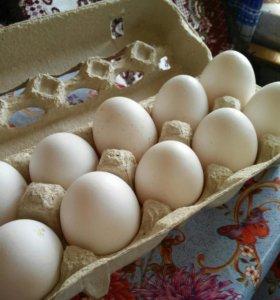 Яйца куриные,от домашних курочек