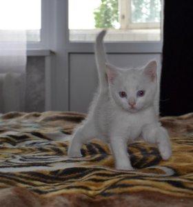 Милые котики ищут домик.      Отдам бесплатно))