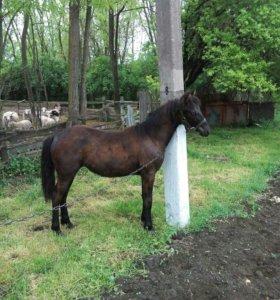 Продаётся лошадь