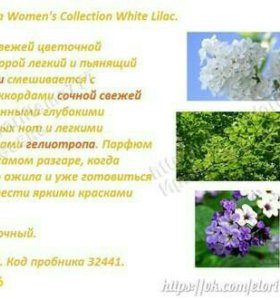 Woman's Collection Innocent White Lilac
