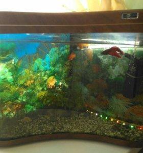 Угловой аквариум на 40л