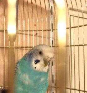 Попугай (клетка+корм+минеральная смесь)