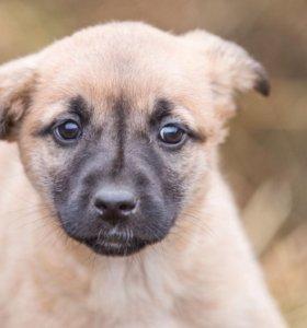 Щенок от домашней собаки в дар