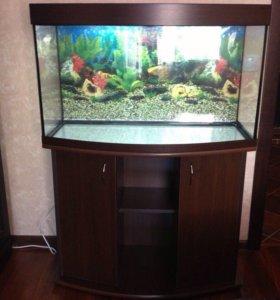 Панорамный аквариум 180 литров.