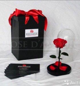 Роза в колбе + подарочная коробка
