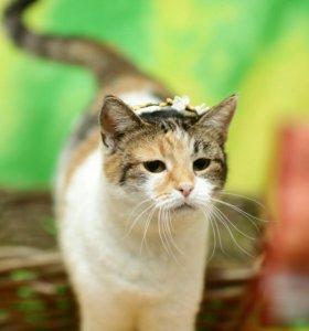 Кошки приюта ищут дом