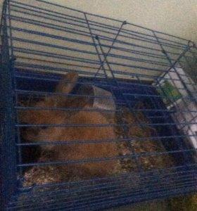 Кролик 🐰 и клетка