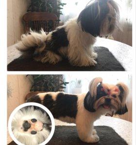Стрижка (груминг) собак