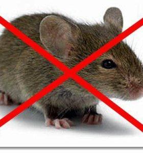 Избавим вас от крыс,мышей и кротов
