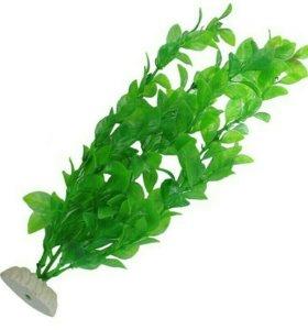 Растение для аквариума.