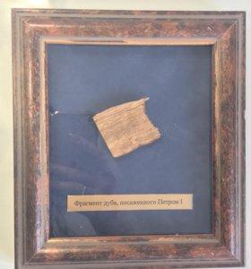 Палетка с фрагментом дуба посаженного Пётром 1