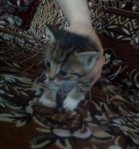 Отдаю в добрые руки котят