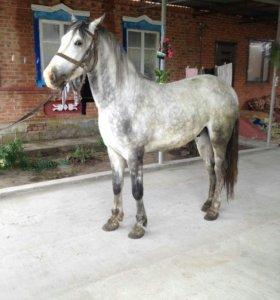 Орловские кони