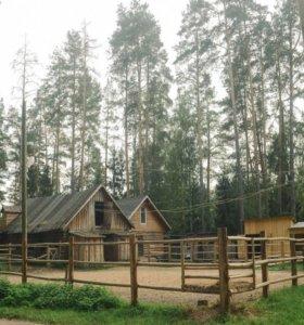 База отдыха конный двор