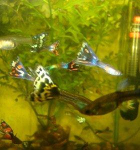 Аквариумные рыбки.