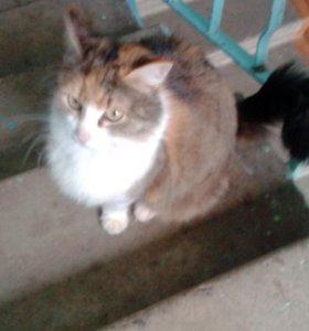 Котята,1,5 месяца,2 кошечки и котик
