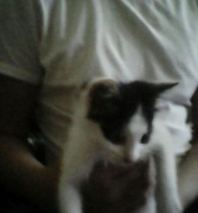 Отдам котёнка!!! СРОЧНО!!!!!