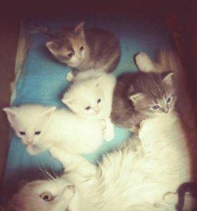 Котята. Все котята забронированы.