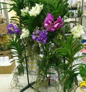 Орхидеи и другие цветы!