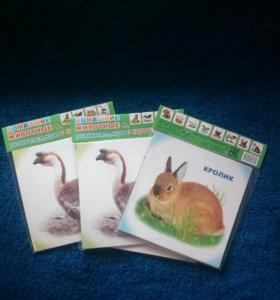 Новые Обучающие карточки