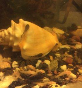 Сомики аквариумные