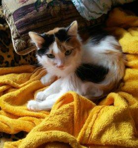 Кошка-Муська