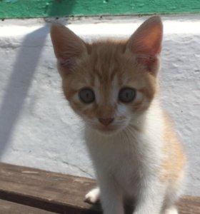 Котёнок, девочка