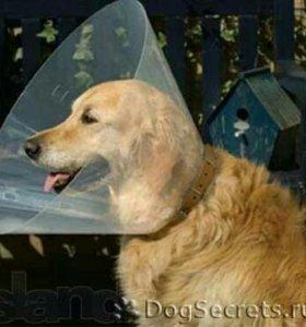 Воротник для собаки
