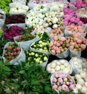Пионы в букете,доставка цветов