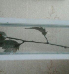 Роза подарочная.В стеклянном тубусе .