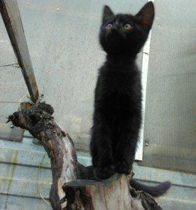 Кошечка(возраст 2 месяца)