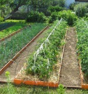 Древесная зола для удобрения,опилки.