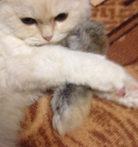 Кроличья лапка ( игрушка для кошек)