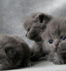 Милые котята.