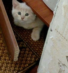Кошечка 1,5 месяца
