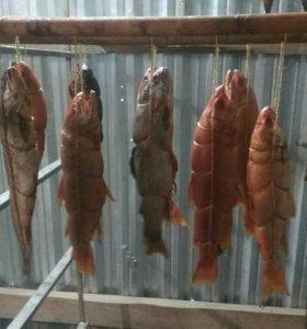 Коптим рыбу горячего холодного копчения