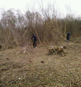 Очистка участка от кустарника, деревьев