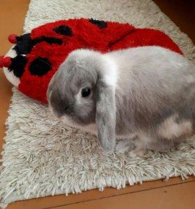 Кролик декоративнвй