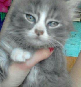 Отдам в хорошие руки маленьгоко пушистого котёнка.