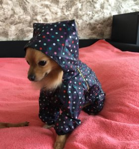 Комбинезон для мелких пород собак