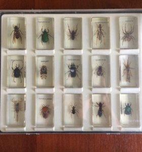 Коллекция жуков