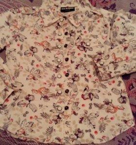 Рубашка фирмы Акула