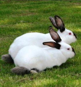 ЛПХ продаёт кроликов.