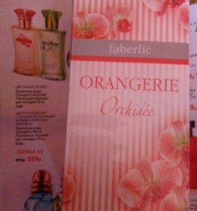 Orangerie Orchidee