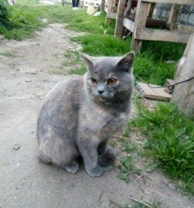Кошка 7мес.