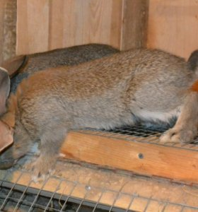 Мясо кролика(фарш, тушка, суповой набор)