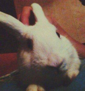 Продам декоративную крольчиху