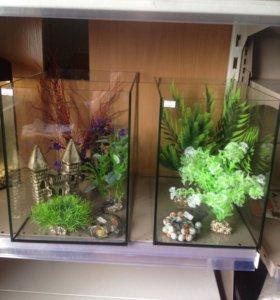 Аквариумы и растения