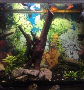 Передержка рыб