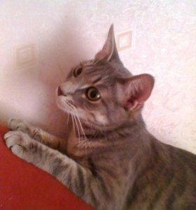 Кошка даром